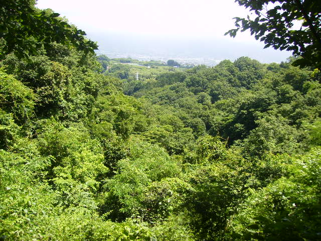 緑の谷104