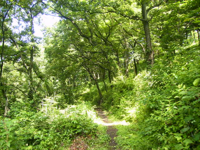 緑の周遊の小道82