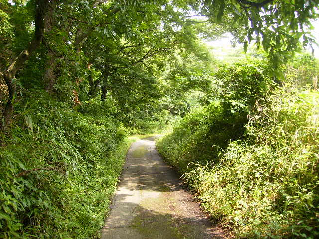 緑の林道20