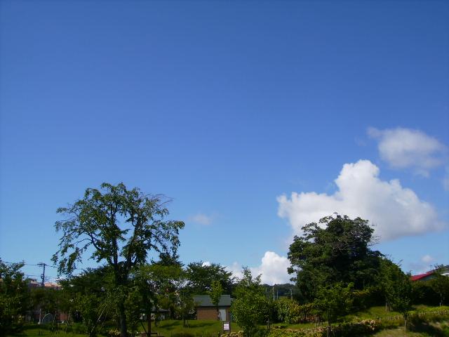 夏の青空13
