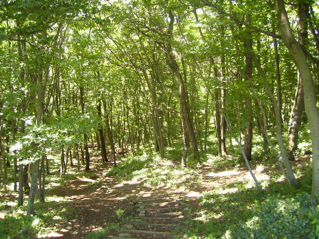 木漏れ日の林118