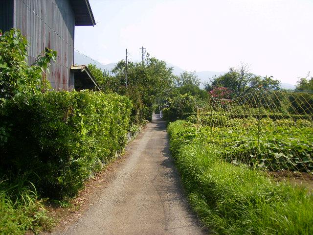 晩夏の田舎道12
