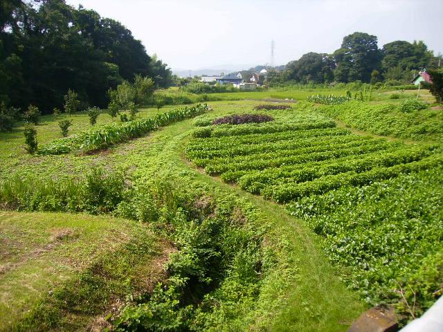 野菜畑10