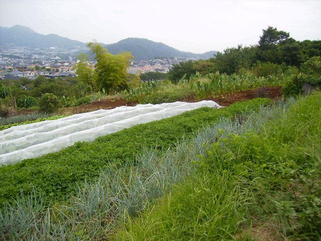 弘法山方面36