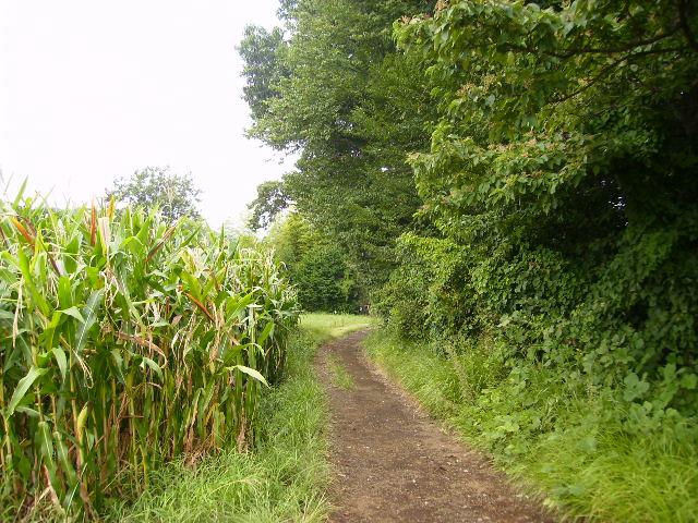 初秋の農道63