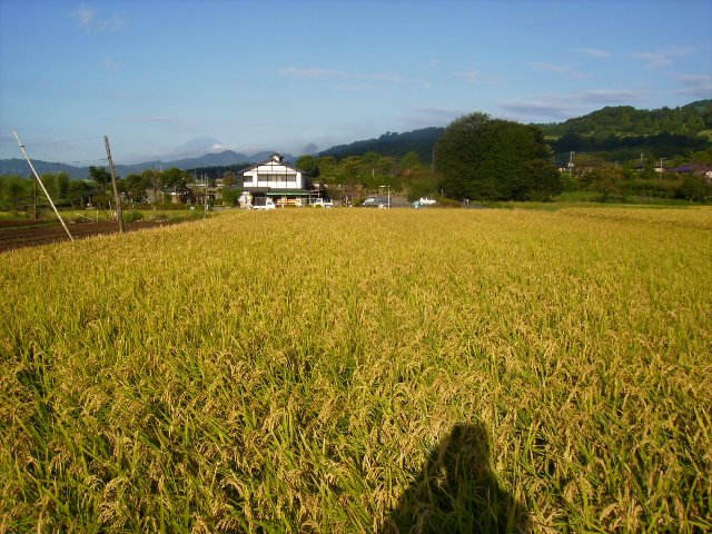 稲田と秋富士83