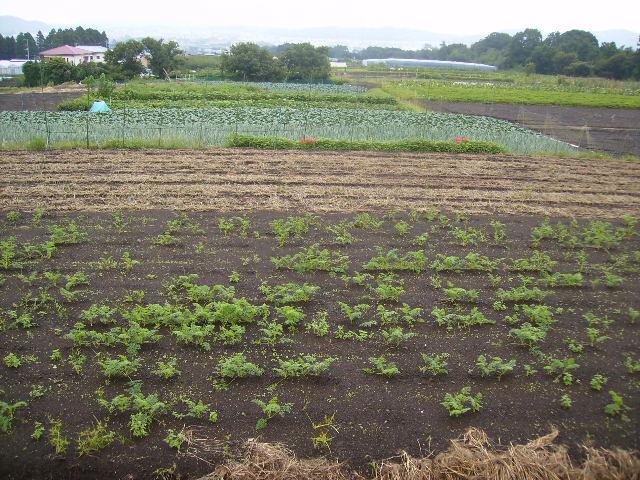 野菜畑121