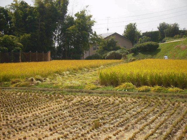 稲刈り中47