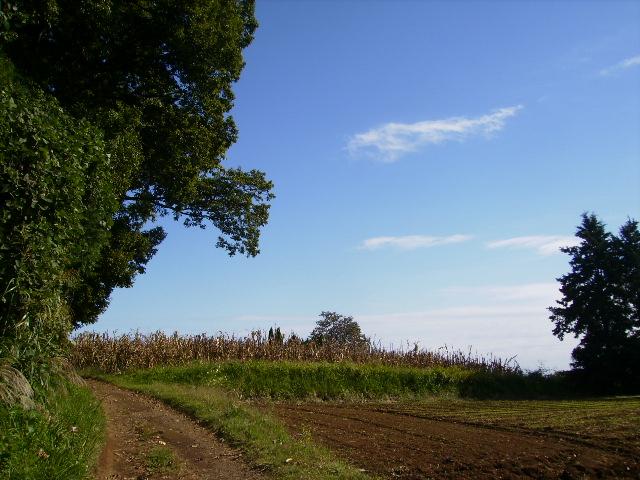 秋の農道123