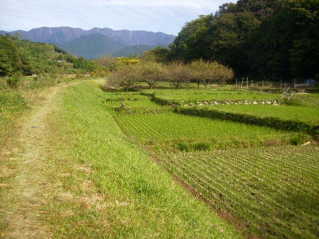 秋の田んぼ37