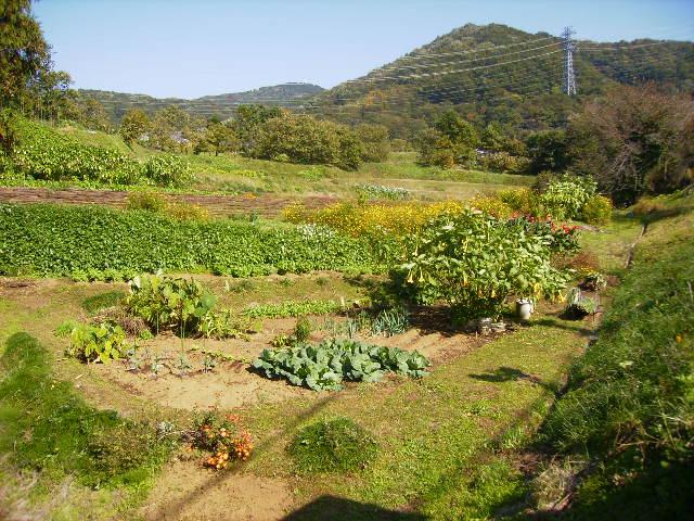 野菜畑16