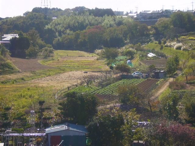 秋の藤棚の谷56