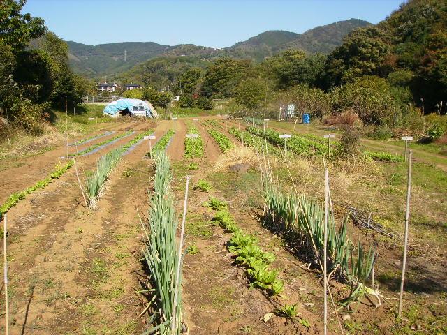 秋の野菜畑53