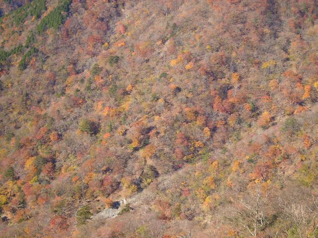 谷の紅葉181
