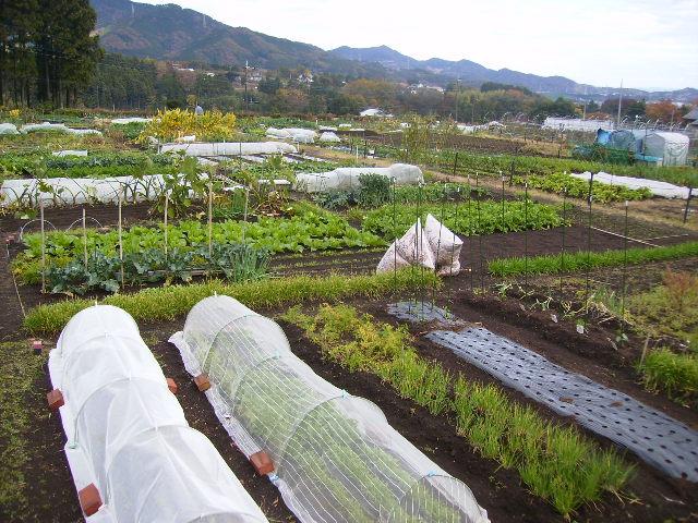 市民農園10