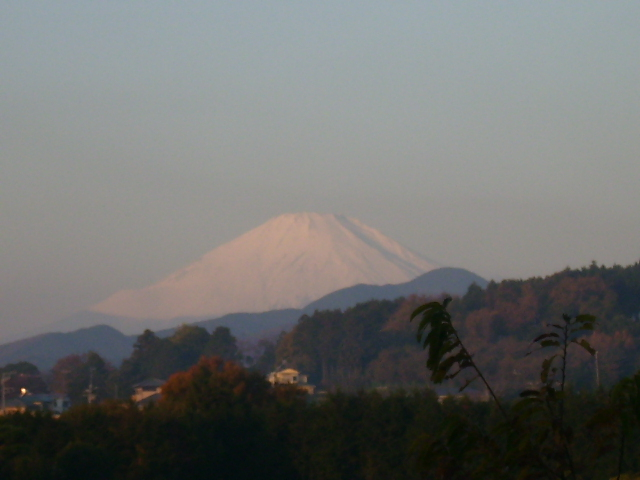 白富士26