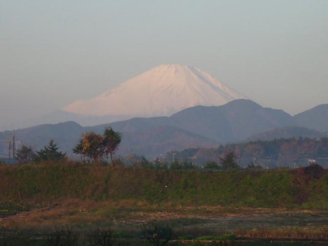 白富士31