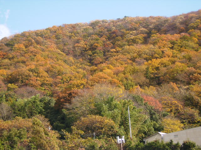 山の黄葉101