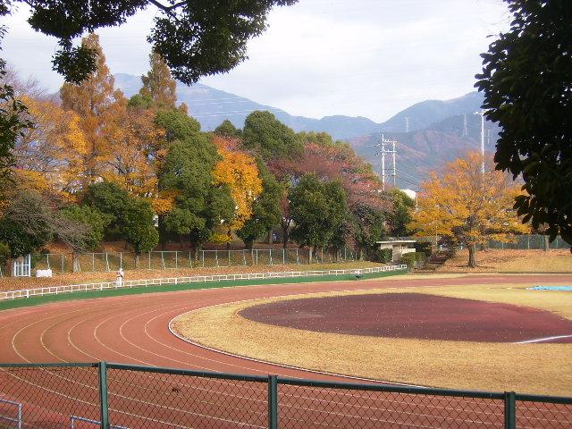 競技場の黄葉13