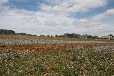 ビニャーレスの風景