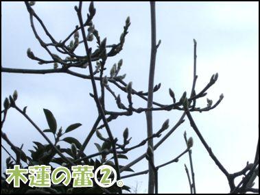 mokuren2
