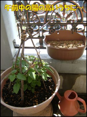 100516植物①