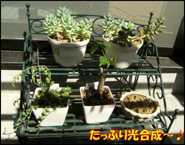 100516植物②