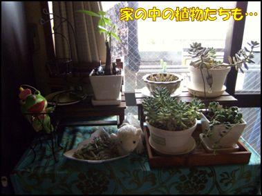100516植物③