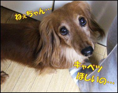 100519kannaキャベツ②