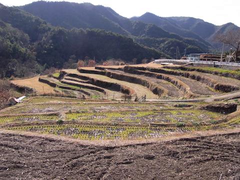 shodoshima nakayama house of shodoshima 2011-2
