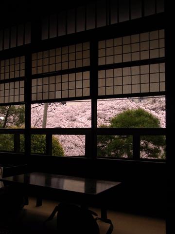 sakura waseda yakumoan-1