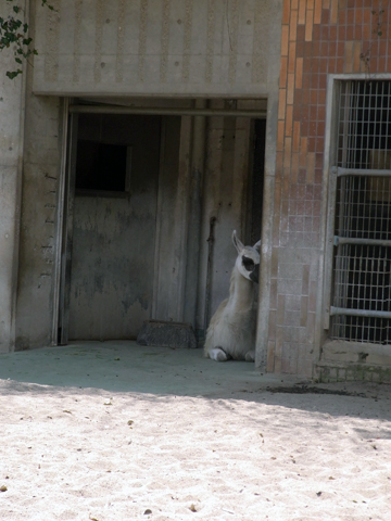 ueno zoo-3