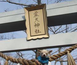 霊犬神社1