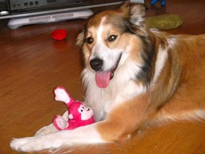 Happy☆Dog