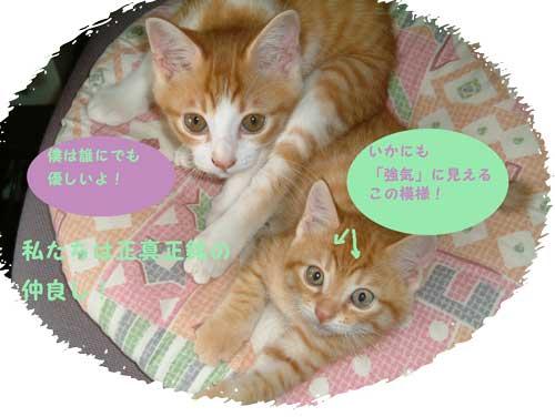 太郎&のこ