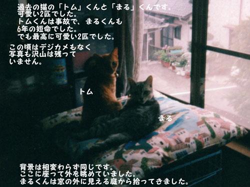 トム&マル、窓辺で