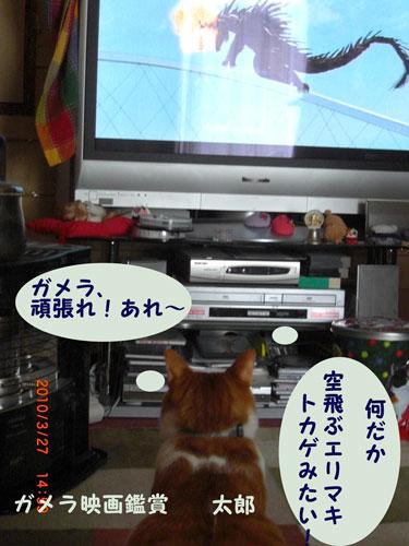 9_20100327222008.jpg