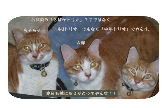 CIMG0662.jpg