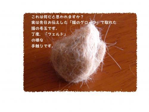 CIMG1077_convert_2010031513_convert_20100318232016.jpg