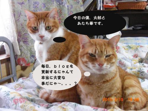 CIMG1077_convert_2010031513_convert_20100319185902.jpg