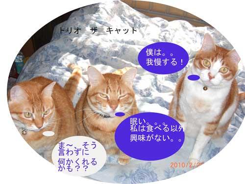 CIMG1458_20100220224452.jpg