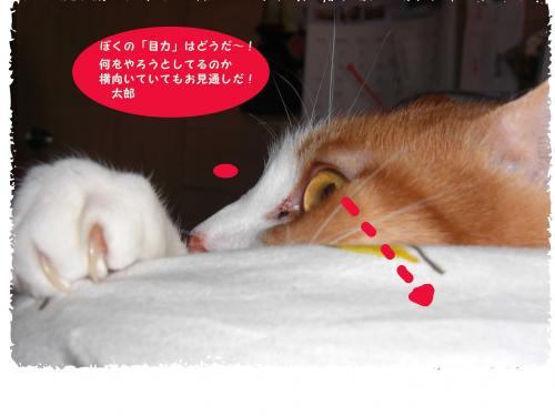 CIMG1524_convert_20100311215552.jpg