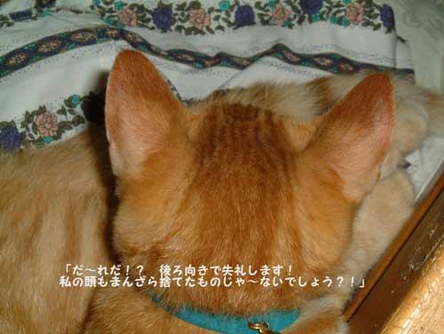 CIMG1619_20100306215906.jpg