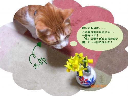CIMG1622_convert_20100307201543.jpg