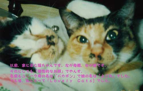 CIMG1622_convert_2010030720_20100309225137.jpg