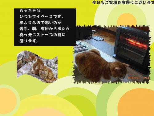 CIMG1625_convert_20100319185955.jpg