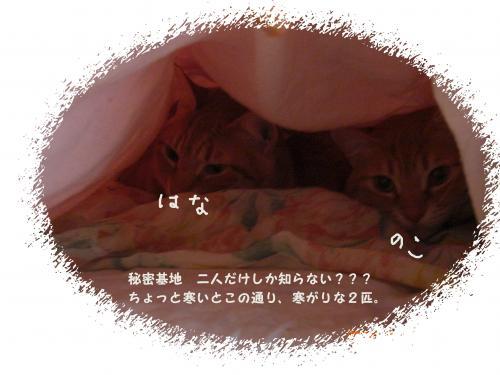CIMG1641_convert_20100320215326.jpg