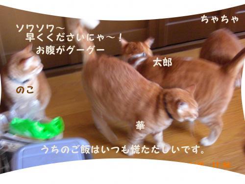 CIMG1678_convert_20100329215759.jpg