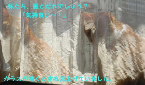 CIMG1690_convert_20100404184854.jpg