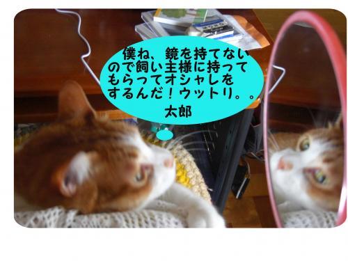 CIMG1720_convert_20100405212936.jpg